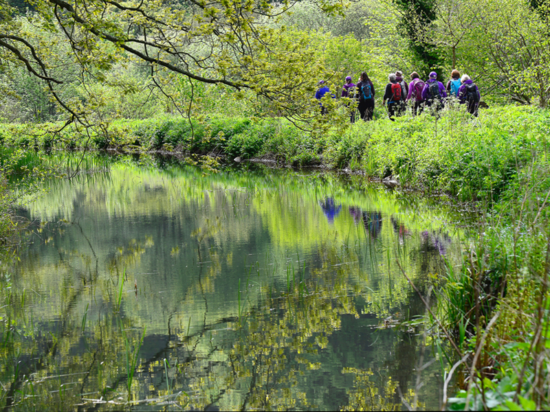 Rustick Weekender - Enchanting Bluebells and Glorious Ancient Woodlands WALX